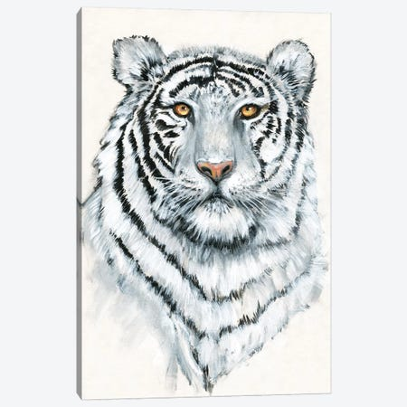 White Tiger II 3-Piece Canvas #TOT650} by Tim OToole Canvas Wall Art