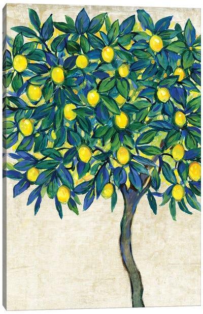 Lemon Tree Composition I Canvas Art Print