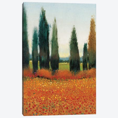 Cypress Trees I Canvas Print #TOT6} by Tim OToole Canvas Wall Art