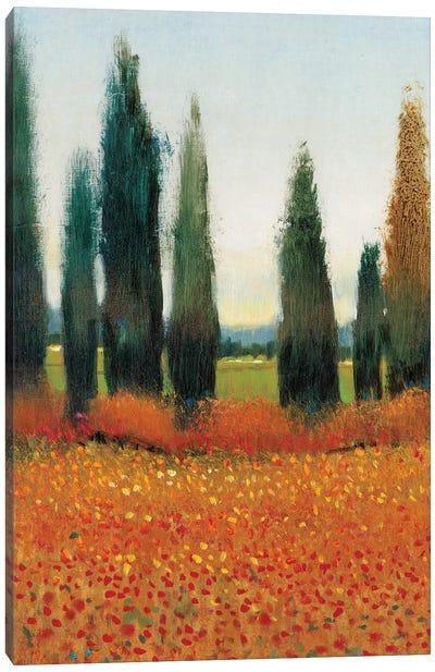 Cypress Trees I Canvas Print #TOT6