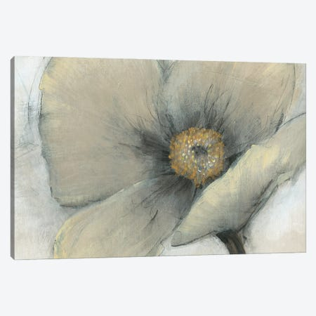 Single Cream Bloom I Canvas Print #TOT701} by Tim OToole Canvas Art