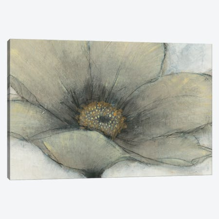 Single Cream Bloom II 3-Piece Canvas #TOT702} by Tim OToole Canvas Art
