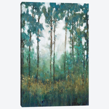Glow in the Forest I Canvas Print #TOT707} by Tim OToole Canvas Art Print