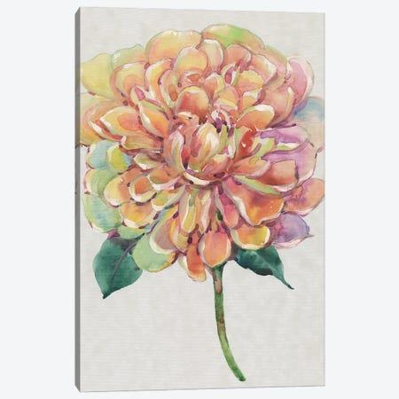 Multicolor Floral I Canvas Print #TOT713} by Tim OToole Art Print