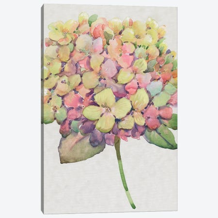 Multicolor Floral II Canvas Print #TOT714} by Tim OToole Canvas Artwork