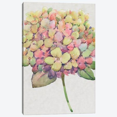 Multicolor Floral II Canvas Print #TOT714} by Tim OToole Canvas Artwork
