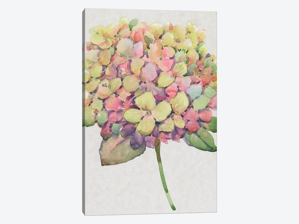 Multicolor Floral II by Tim OToole 1-piece Art Print