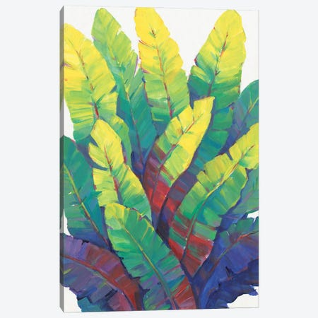Sunlit Banana Leaves I Canvas Print #TOT764} by Tim OToole Canvas Print