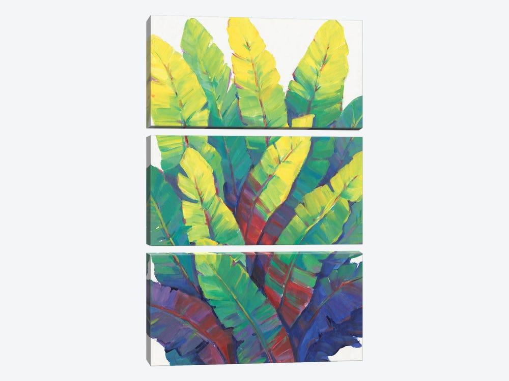 Sunlit Banana Leaves I by Tim OToole 3-piece Canvas Art