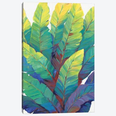 Sunlit Banana Leaves II Canvas Print #TOT765} by Tim OToole Art Print