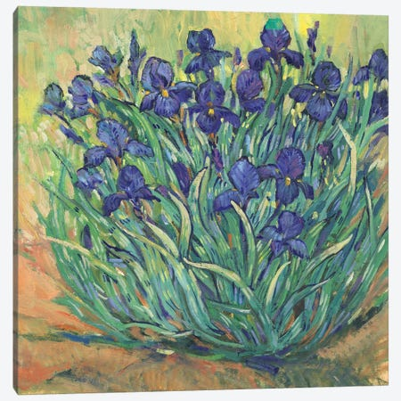 Irises in Bloom I Canvas Print #TOT797} by Tim OToole Canvas Art