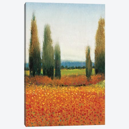 Cypress Trees II Canvas Print #TOT7} by Tim OToole Canvas Art