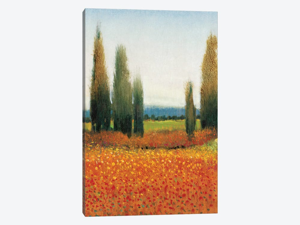 Cypress Trees II by Tim O'Toole 1-piece Canvas Art