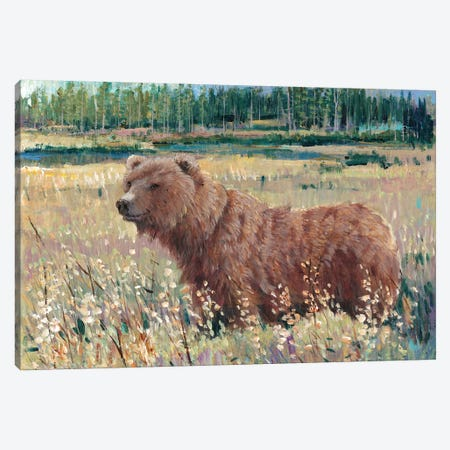 Bear In The Field Canvas Print #TOT85} by Tim OToole Canvas Artwork