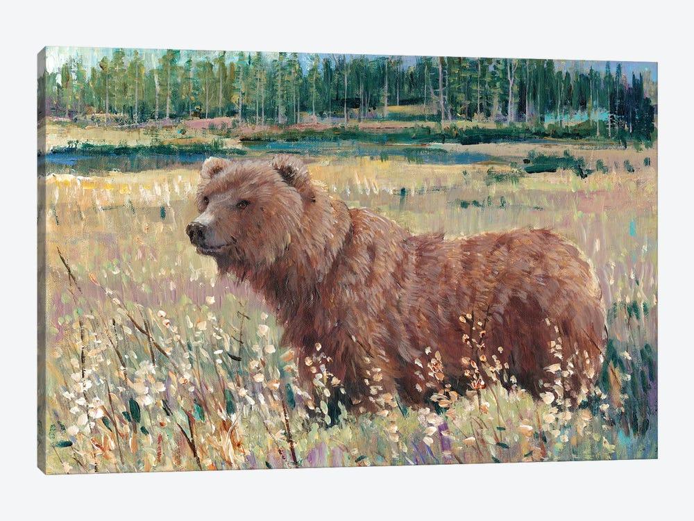 Bear In The Field by Tim OToole 1-piece Canvas Art