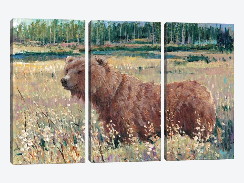 Bear In The Field by Tim OToole 3-piece Canvas Art