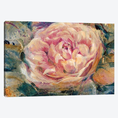 Floral In Bloom IV Canvas Print #TOT97} by Tim OToole Art Print