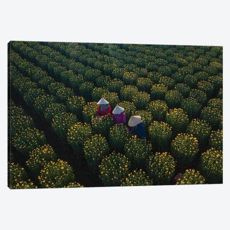 Daisy Farm IV Canvas Print #TPH10} by Trung Pham Canvas Print