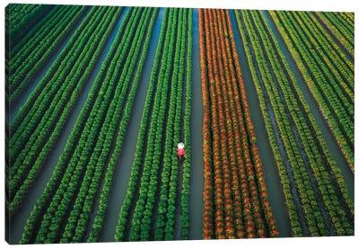 In The Flower Village Canvas Art Print