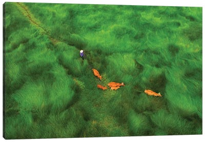 Passing The Grass Field Canvas Art Print