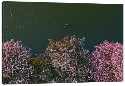 Pink Trumpets Flowers Season Canvas Art Print