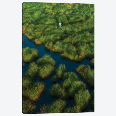 Water-Chetsnuts Harvesting Season III Canvas Print #TPH45} by Trung Pham Canvas Art Print