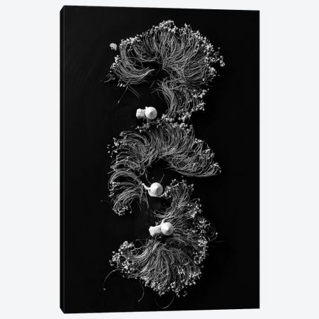 Waterlilies I Canvas Print #TPH46} by Trung Pham Canvas Art Print