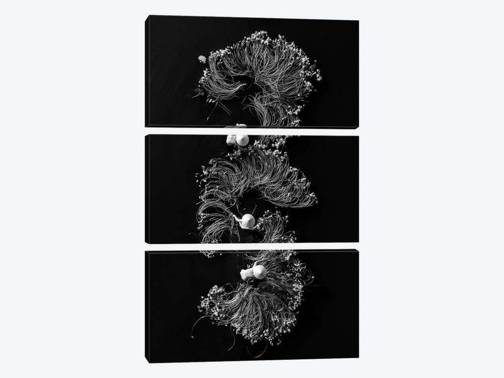 Waterlilies I by Trung Pham 3-piece Canvas Art Print