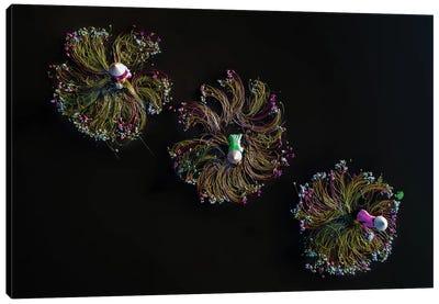Waterlilies III Canvas Art Print