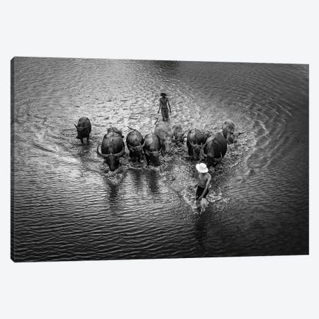 Buffalos Boy IV Canvas Print #TPH4} by Trung Pham Canvas Artwork