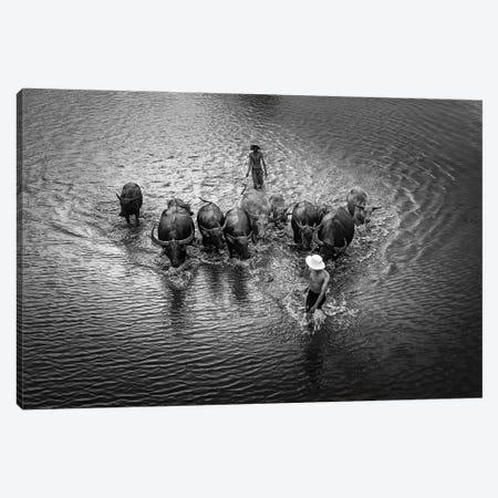 Buffalos Boy IV Canvas Print #TPH4} by Trung Pham Canvas Artwork