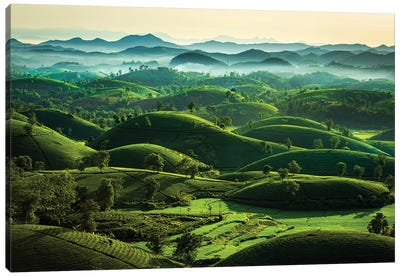 Tea Hills Canvas Art Print