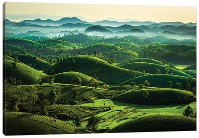 Tea Hills Canvas Art Print