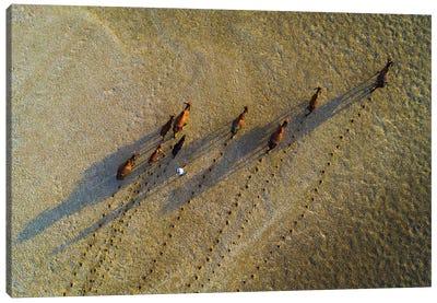 Buffalos Raising Canvas Art Print