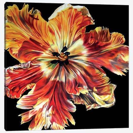Large Parrot Tulip Canvas Print #TPL15} by Natalie Toplass Canvas Artwork
