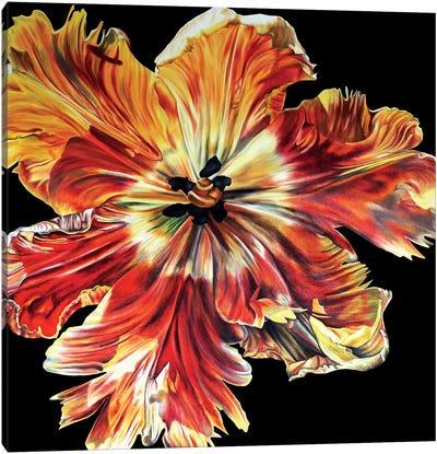 Large Parrot Tulip Canvas Art Print