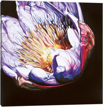 Large Waterlily I Canvas Art Print