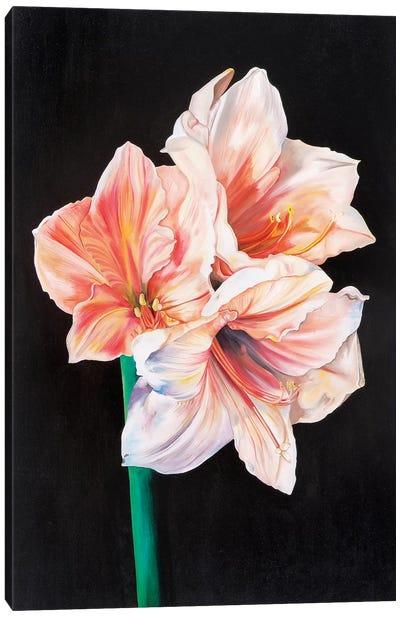 Amarhyllis Canvas Art Print