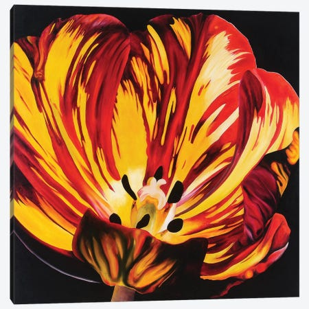Red & Yellow Tulip Canvas Print #TPL25} by Natalie Toplass Canvas Art Print