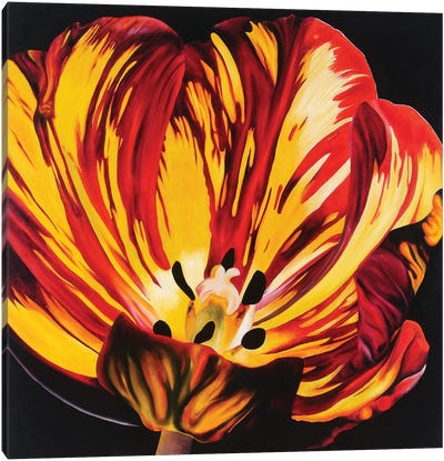 Red & Yellow Tulip Canvas Art Print