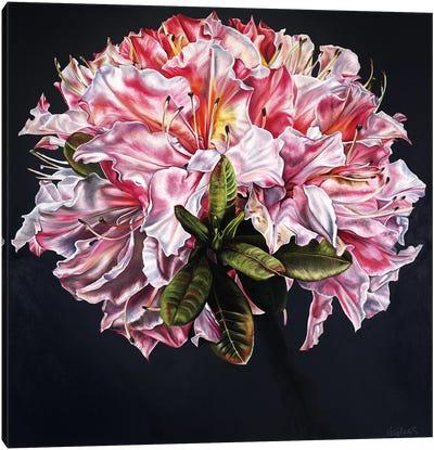 Rhodi Canvas Art Print