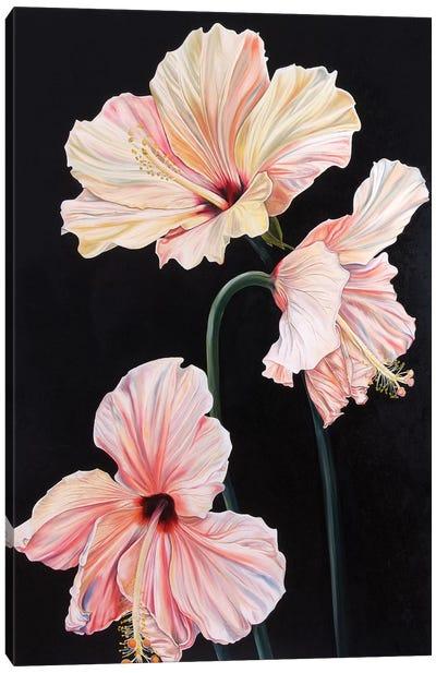 Rose of China  Canvas Art Print