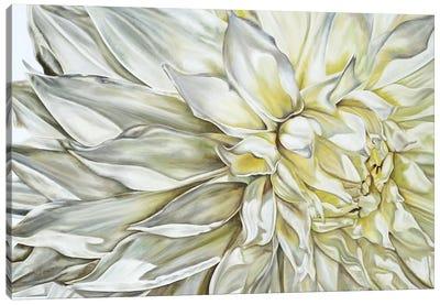 White Dahlia II Canvas Art Print