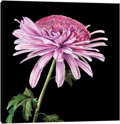 Xanth Canvas Art Print