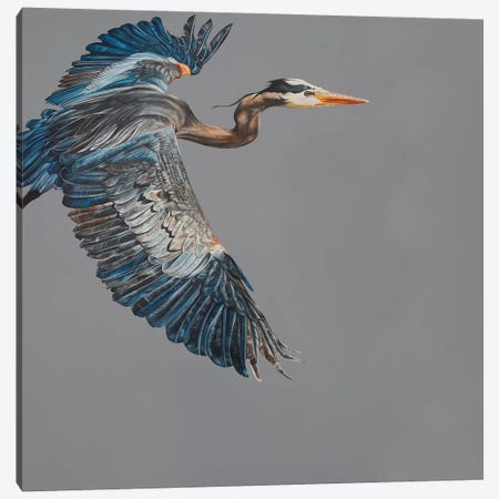Blue Heron 3-Piece Canvas #TPL3} by Natalie Toplass Art Print