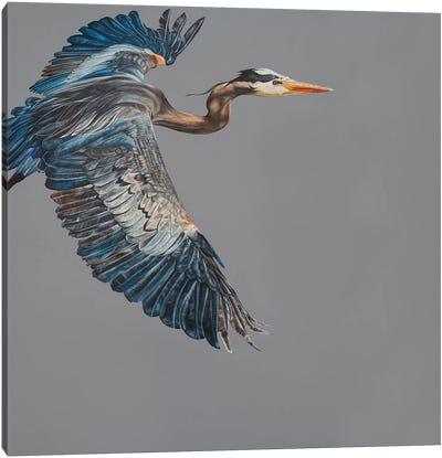 Blue Heron Canvas Art Print