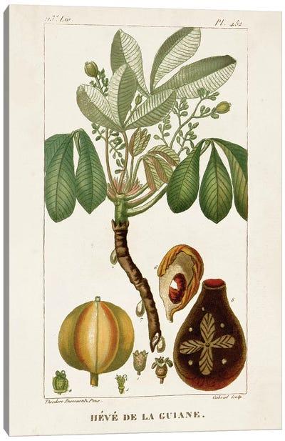 Exotic Palms VIII Canvas Art Print