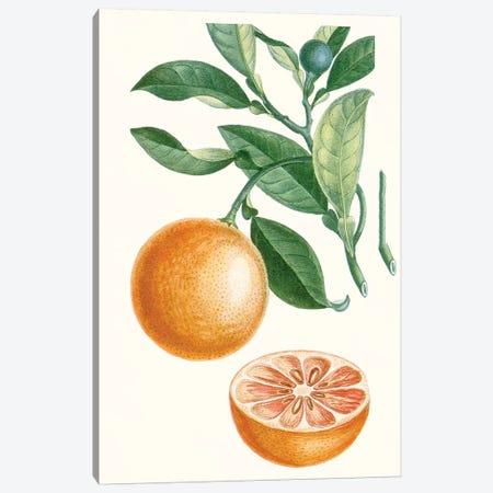 Fruit II Canvas Print #TPN12} by Turpin Art Print