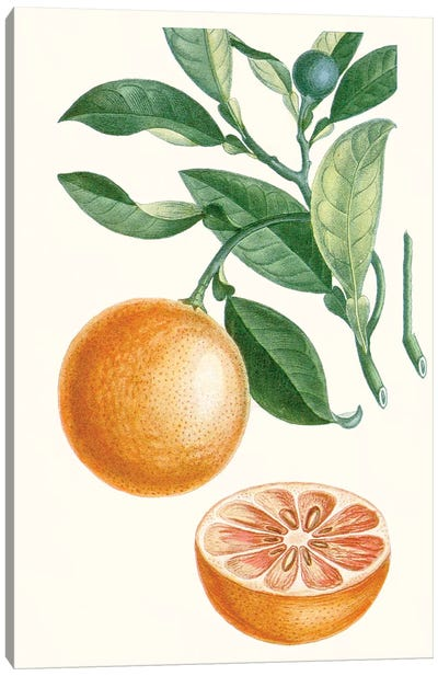 Fruit II Canvas Art Print