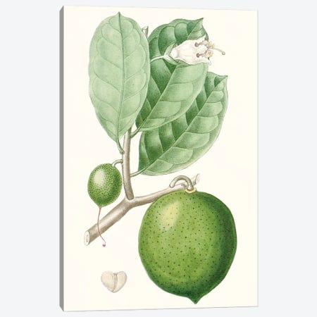 Fruit III Canvas Print #TPN13} by Turpin Art Print